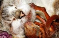 Котики усыновление у животных